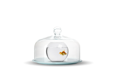 прикрытый аквариум